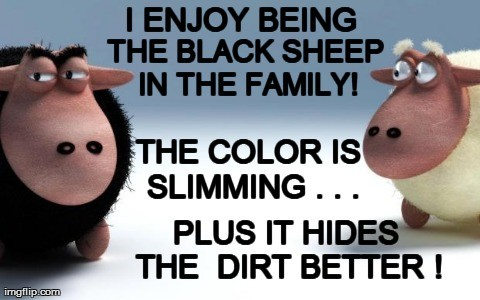 Fridays?  There for the Black Sheep!